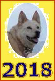 2018-й - Год желтой (стихия Земли) Собаки по восточно-азиатскому календарю. Картинка на открытку, с фотографией символа этого года